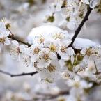 Гибель весны. Крым -2