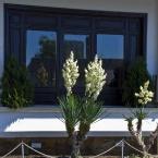 Болгарські мотиви 07. Квіти Поморія 01