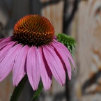 Цветочек 2