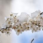 Гибель весны. Крым