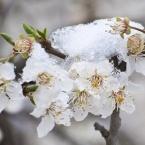 Гибель Весны. Крым 3